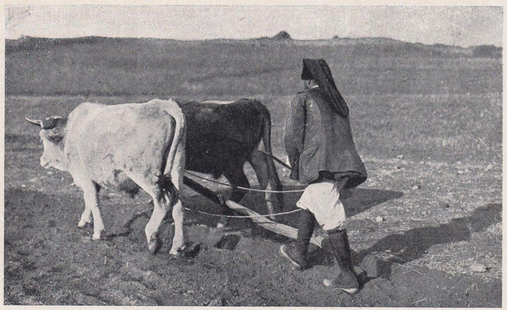 coltivazione e lavorazione nei campi